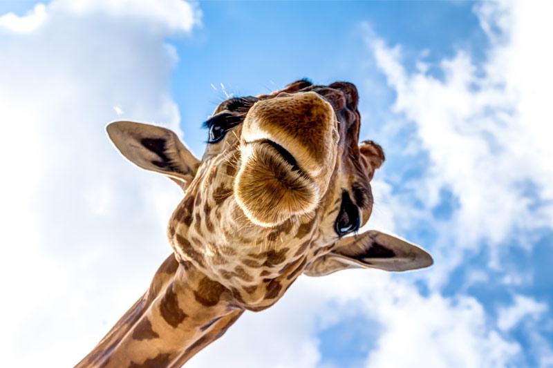 team building verona percorso esperienziale linguaggio giraffa